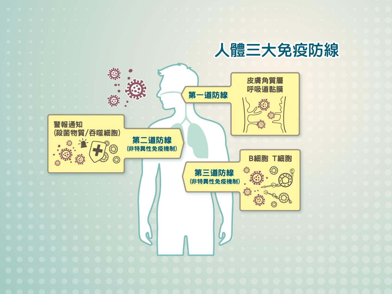 人體免疫防線